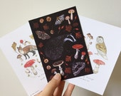 The Floral Fox and Lamb Little Collaboration - Woodland Creatures A6 Pack - Fox Badger Owl