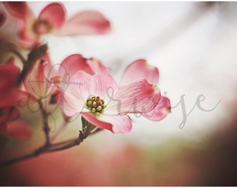Flower Photography. Tree Flower Photography. Pink Flower Photography. Pink Flower Photo. Floral Print. Flower Print. Flower Art Print.