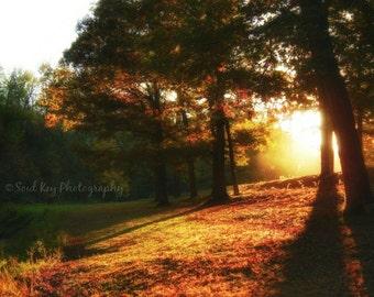 Autumn, Fall Foliage, Leaves, Trees, Sunset, Sunshine, Golden Sunset, Sun Through the Trees, Artistic Photography, Photo Art, Photo Prints