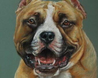 HAPPY DOG PORTRAIT, Amstaff, original pastel drawing, hand drawn, large size, pet portrait,