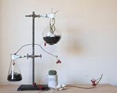 Botanical Labware for Indoor Gardening/Science Chemistry Planter/Unique Home Decor