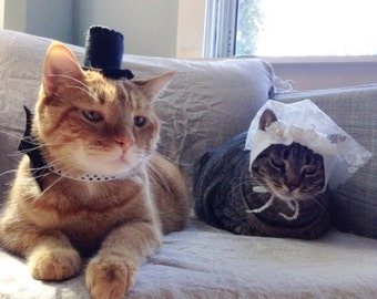 Bride and Groom Cat Costumes