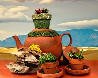 Succulent Tea Party / Teacup Succulent / Teapot Succulent / Unique Planter / Unique Gift