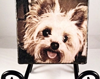 Happy Yorkie Close-Up Coaster Set ( includes 4 tiles )