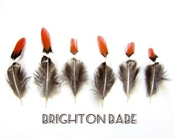 10 Glam Phesant feathers. Natural Feathers for crafts Grey/Brown/White & Rusty Orange. UK Seller