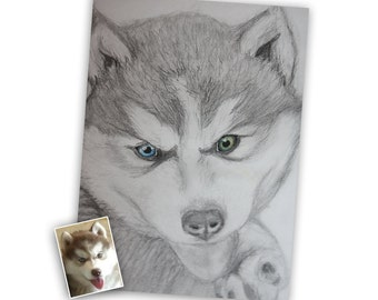 Commissioned drawing, commissioned art, siberian husky drawing, drawing of pet, custom pet portrait, custom drawing, drawing of pet, art