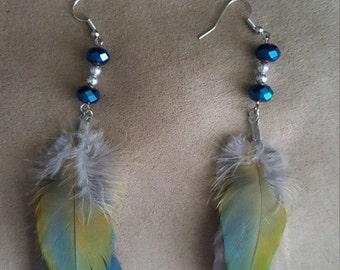 Macaw feathr earrings