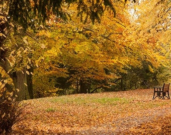 A6 Greeting Card – Autumn Colours High Wycombe - 105mm x 148mm (blank inside)- with envelope, photo greetings card, fine art card