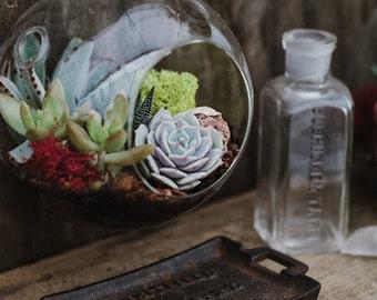 Hanging Globe Glass Terrarium Kit with Succulent Plants FREE SHIPPING - Beautiful Indoor Succulent Cactus Garden