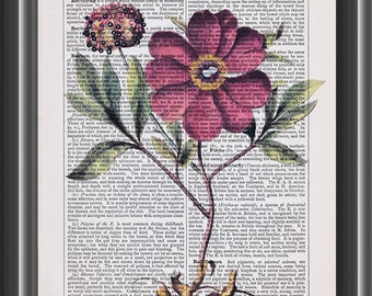 red peony vintage Basilius Besler botanical art print on dictionary page home decor kitchen #108
