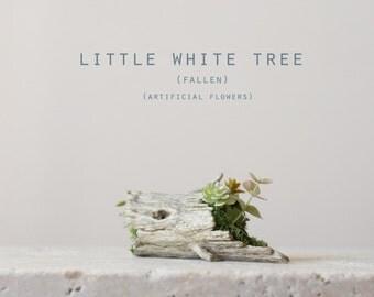little white tree (fallen)