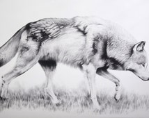 PRINT: Black and White Wolf Limited Edition