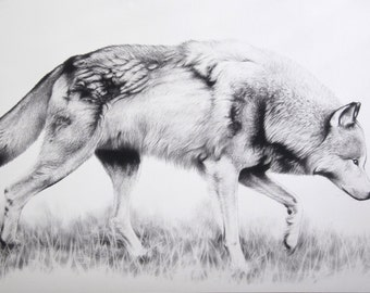 Wolf Limited Edition Print