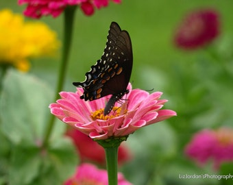 Butterfly Garden Digital Photo