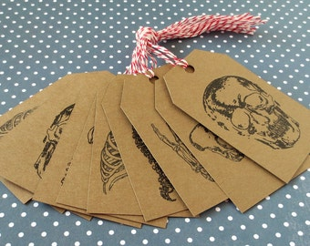 Skeleton Gift Tags - Bone Drawings - Vintage Style - Medical Textbook - Halloween - Med School Student - Human Anatomy - Macabre Design