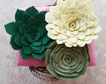 Succulents - Felt Succulent - Succulent Display