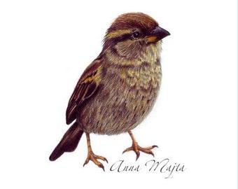 original art - bird art - bird drawing - A5