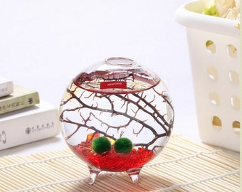 Red/Green/Sea Blue Marimo Terrarium kit with 3 feet glass orb terrarium,marimo balls,glass gravel,sea fan-gifts for niece,home desk decor