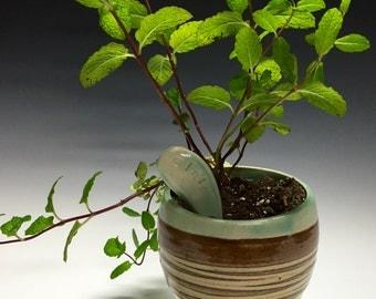 Herb Planter - Kaya Collection