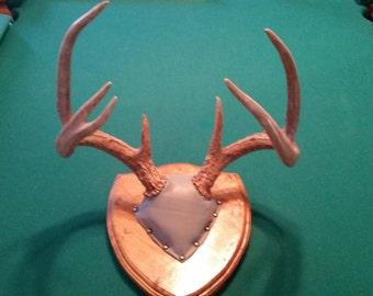 Deer Antler Mount 7pt.