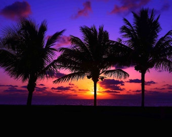Sunrise and Silhouette Dreams