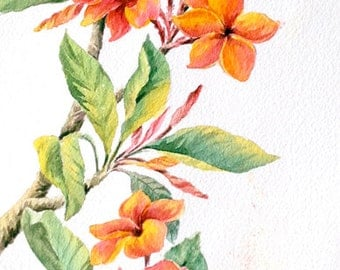 "Plumeria watercolor painting. Plumeria painting. Original watercolor painting. Watercolor flower painting. Original flower painting. 7""x17'"