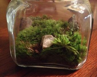 All natural vibrant Moss Terrarium