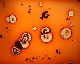 Cellular landscape. foto-diapositiva. mujerlaberinto. Manu.