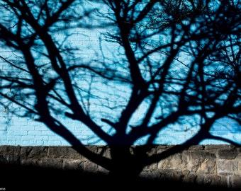 Tree Shadow, Shadow Photograph, Abstract Photography, Tree, Shadow, Silver City, New Mexico, Shadow Art, Wall Art, Home Decor, Abstract, Art
