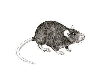 Rat Illustration - Pen and Ink