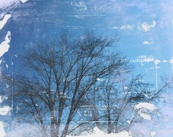 Photograph Tree Branches Blue Sky Skies Canvas 8x10