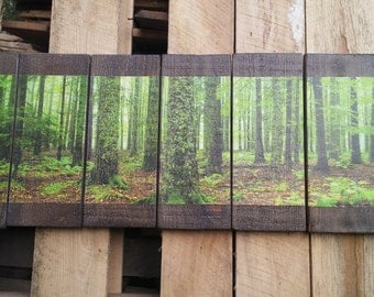 Beautiful Forest  39 x 14 Wall Hanging