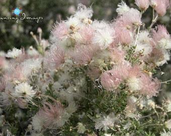 Fluffy Little Flower