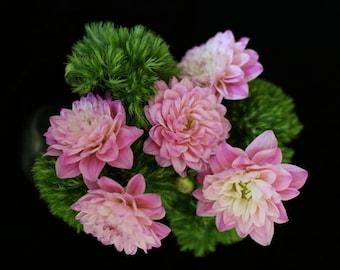 Hello Dahlia-ing -Photography, Dahlias, Floral