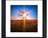 12x12 Lone Tree Fine Art Photography Print - You Are Not Alone