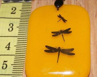 Dragonflys on Yellow
