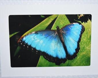Butterfly 3 - Bule