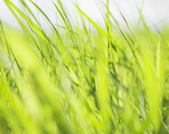 photo digital download green Blades of Grass 24x16in