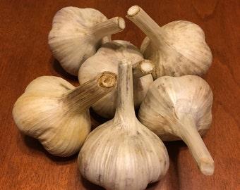 Organic Hardneck Garlic
