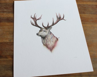 Stag Print.  Ink and watercolour painting created by Aimee Nesbitt.