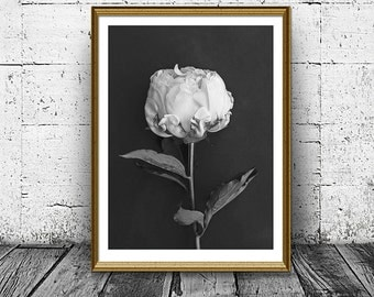 Peony Flower Print, Black and White Photo, Printable Art, Black and White flower, Instant Download, Last Minute Gift, Wall Art Decor