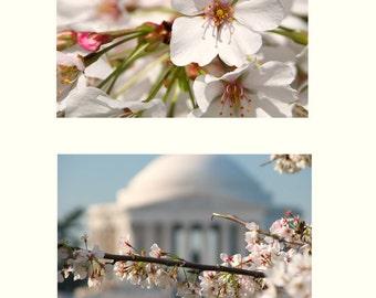 America's Cherry Blossoms