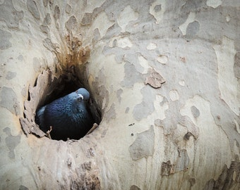 Bird in a Tree Photograph Print, Nature Photography