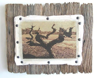 Old Barossa vine sepia-tone on calico