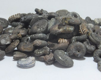 Gault Clay Ammonites - 100 million years old - beads - jewellery - fossil collectors - history - museum