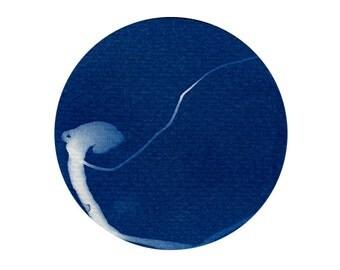 Marine worms