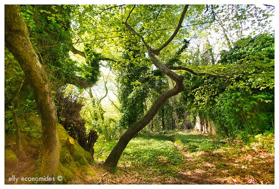 woodland, fairytale, elves, trees, children's room, wall art, countryside, green, fine art photography, Forest Glade, 031. 'Forest Glade'