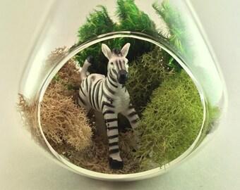 Zebra Moss Terrarium