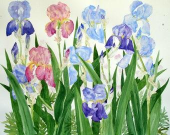 Iris garden artist signed giclee print.