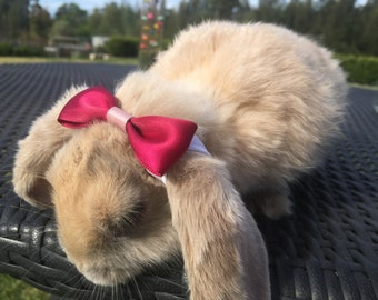 Hair Bow / Bunny Bow for Rabbits
